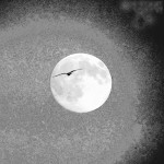 Vogel im Mond